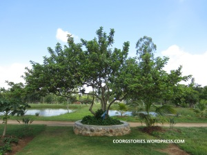 wildredguavatree